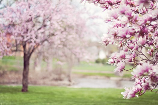 BLOOM: Why Spring is the Season for Therapy